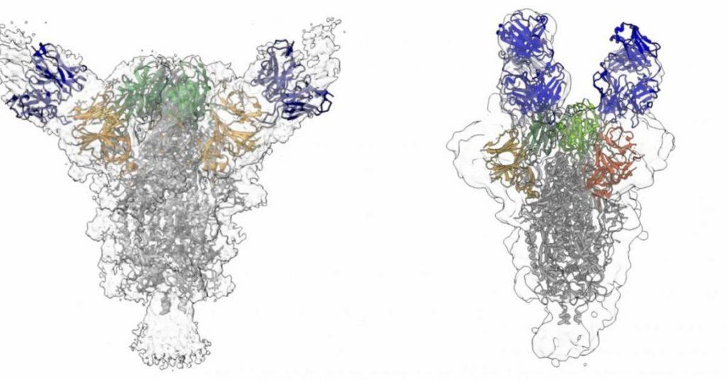Científicos estadounidenses dicen que los anticuerpos aislados de pacientes con COVID-19 podrían suprimir el virus